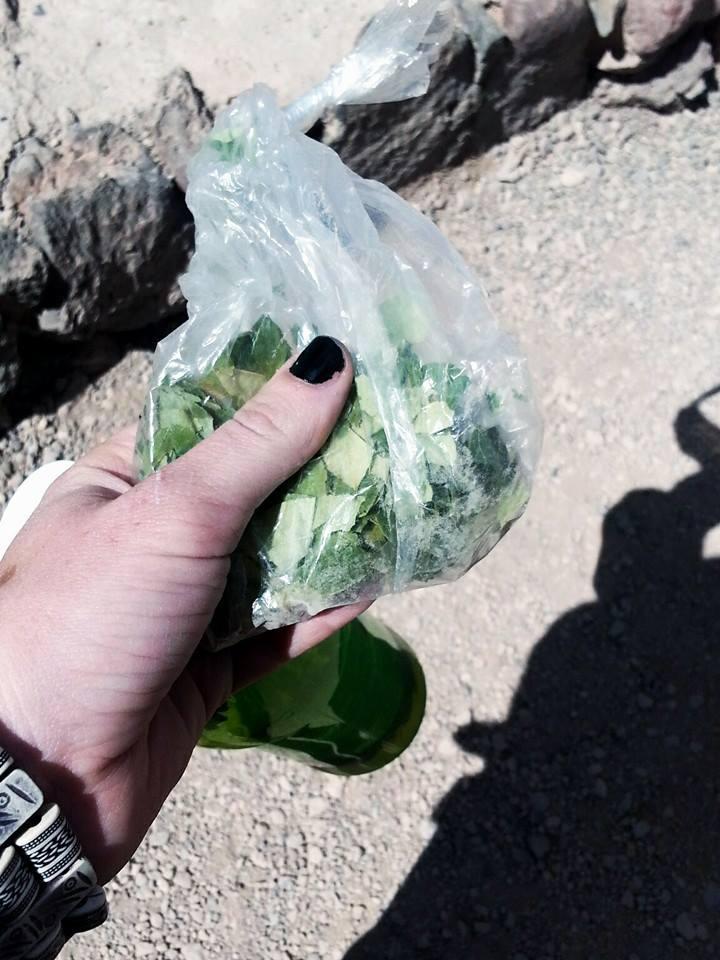 Coca Leaves   Visit Atacama Desert: The Perfect 4 Day San Pedro de Atacama Itinerary