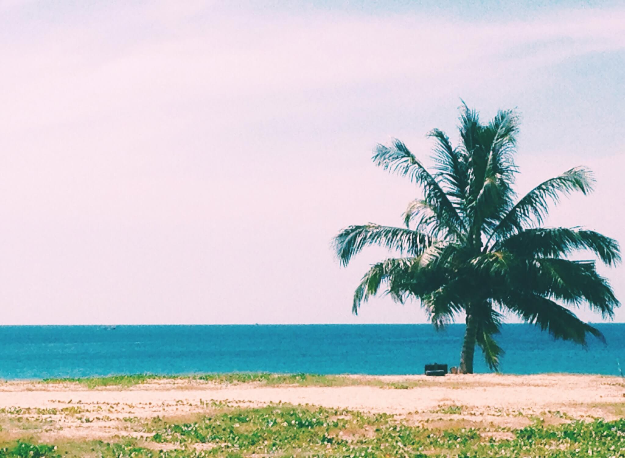 Palm tree on Karon Beach, Phuket