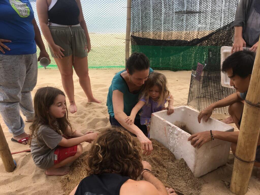 Keeping Turtles Safe | Ethical Animal Tourism