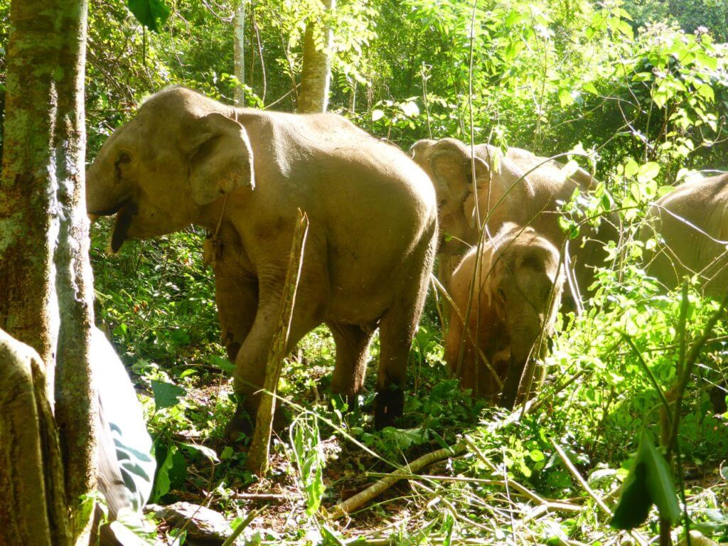 Elephants walking in a forest | Ethical Animal Tourism