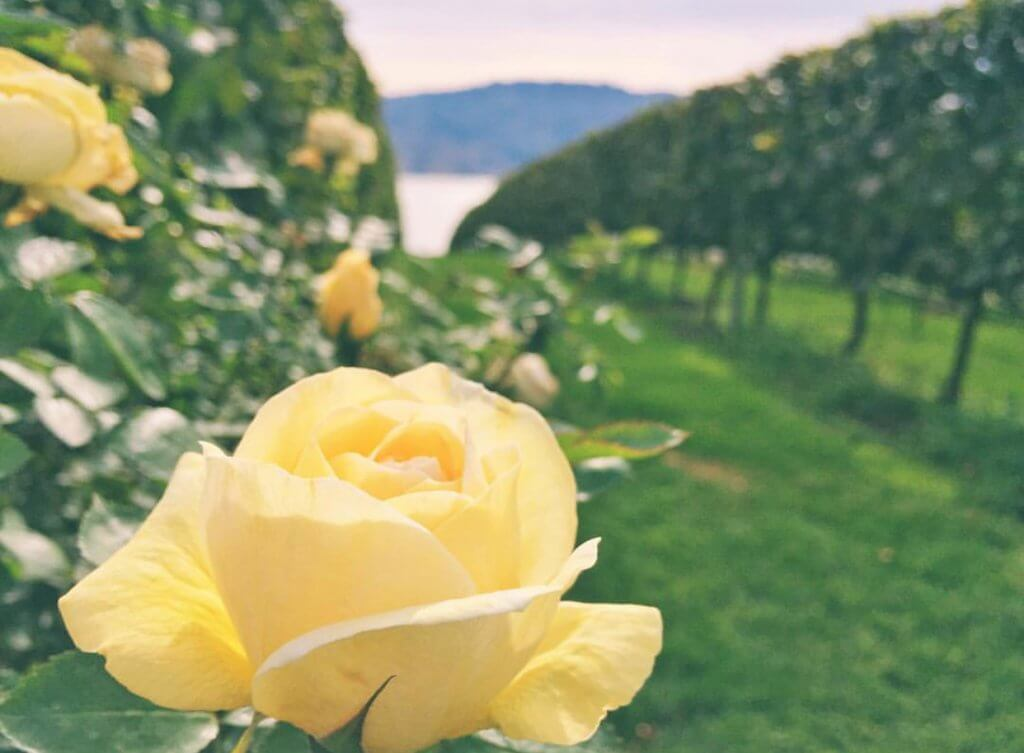 What to do in Kelowna