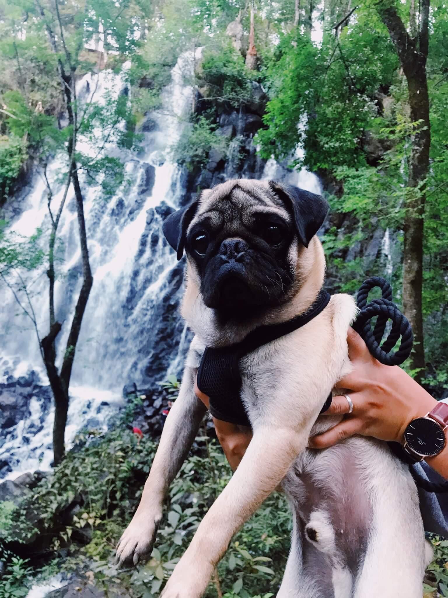 Dog near Velo de Novia Waterfall
