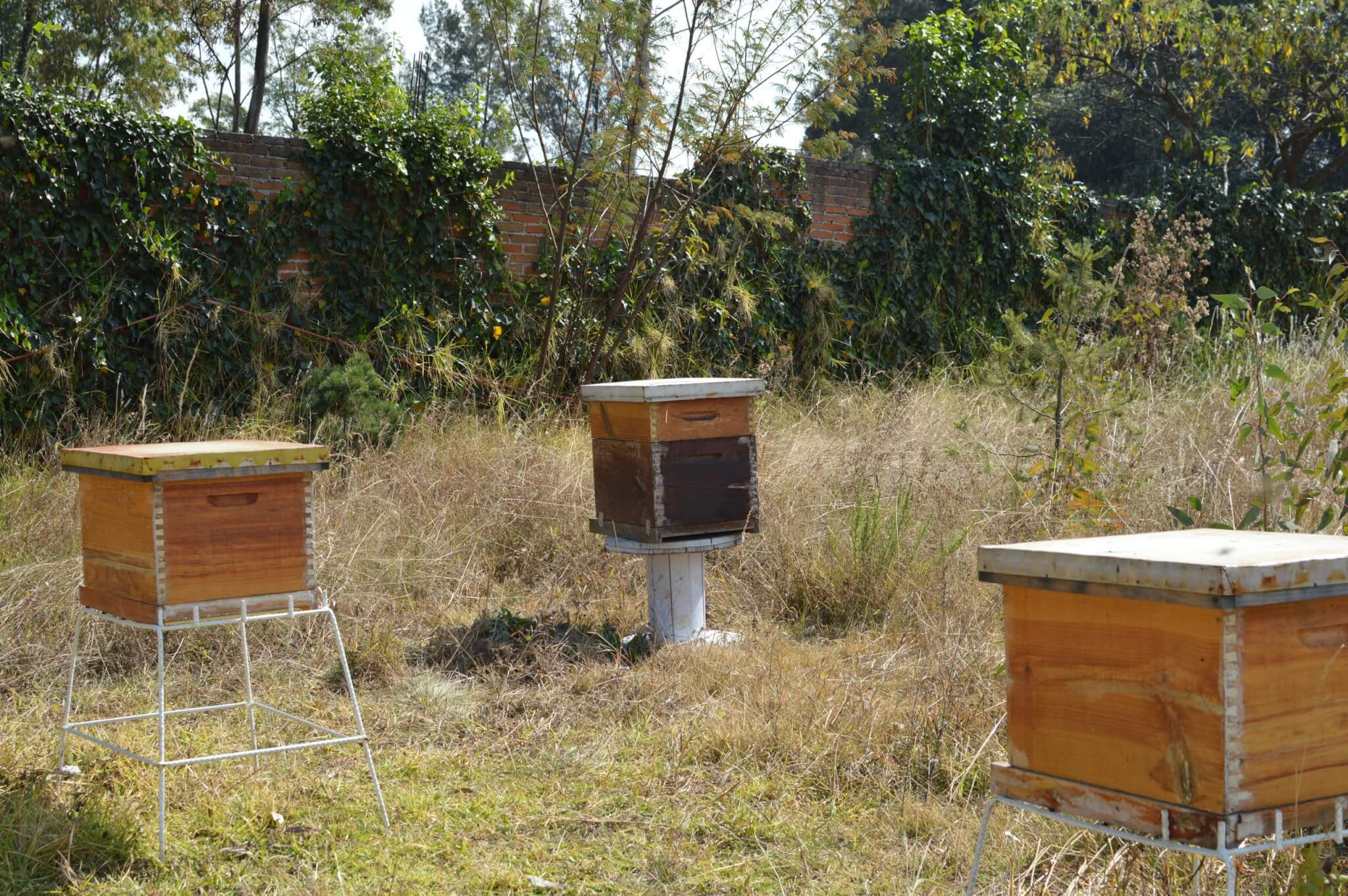Bee Hives in Mexico City | Apicultura Mx