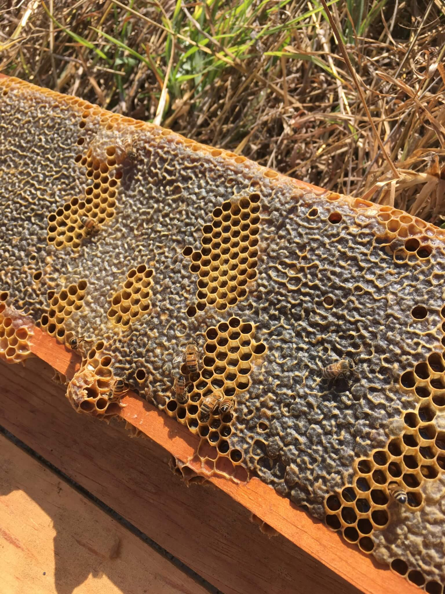 Beekeeping Experience | Apicultura Mx