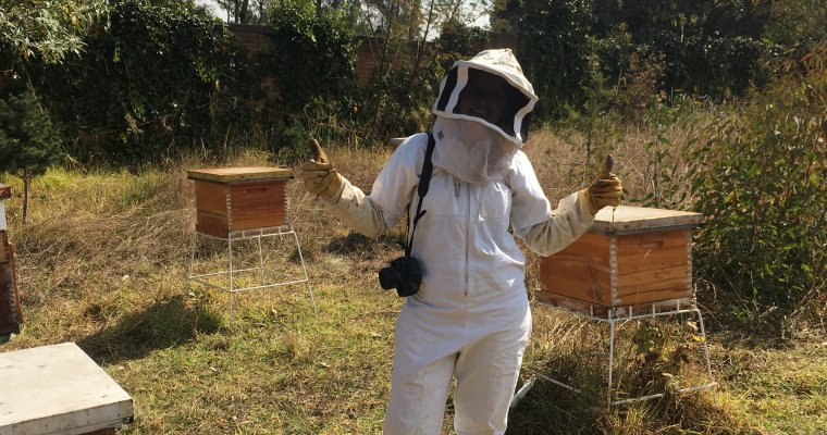 Apicultura Mexico City: The Eco Beekeeping Experience You Need to Try